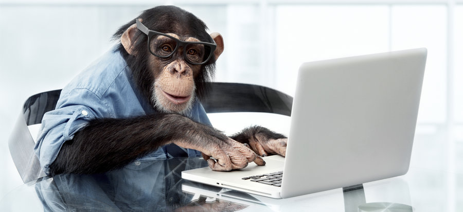 Monkey on computer writing our newsletter